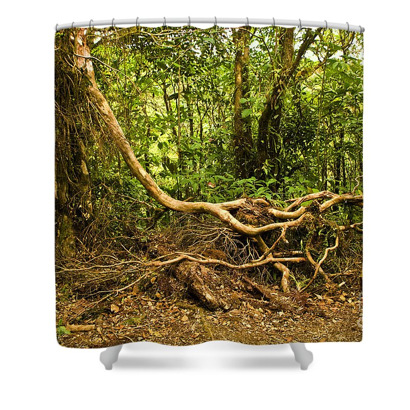 Tree Shower Curtain featuring the photograph Branching Out In Costa Rica by Madeline Ellis