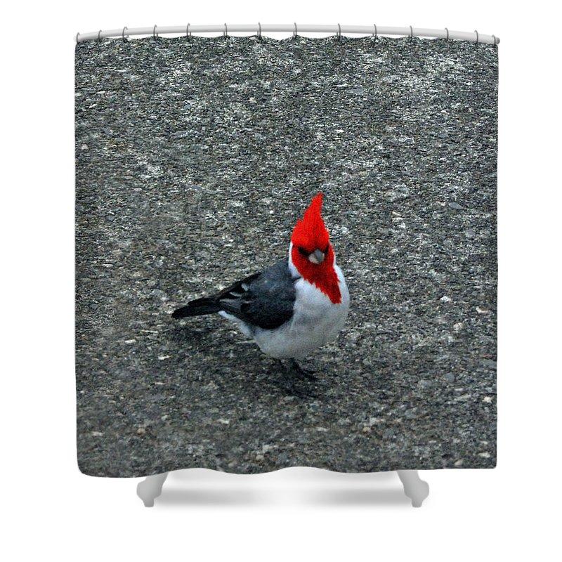 Brazillian Shower Curtain featuring the photograph Brazillian Cardinal by Carol Eliassen