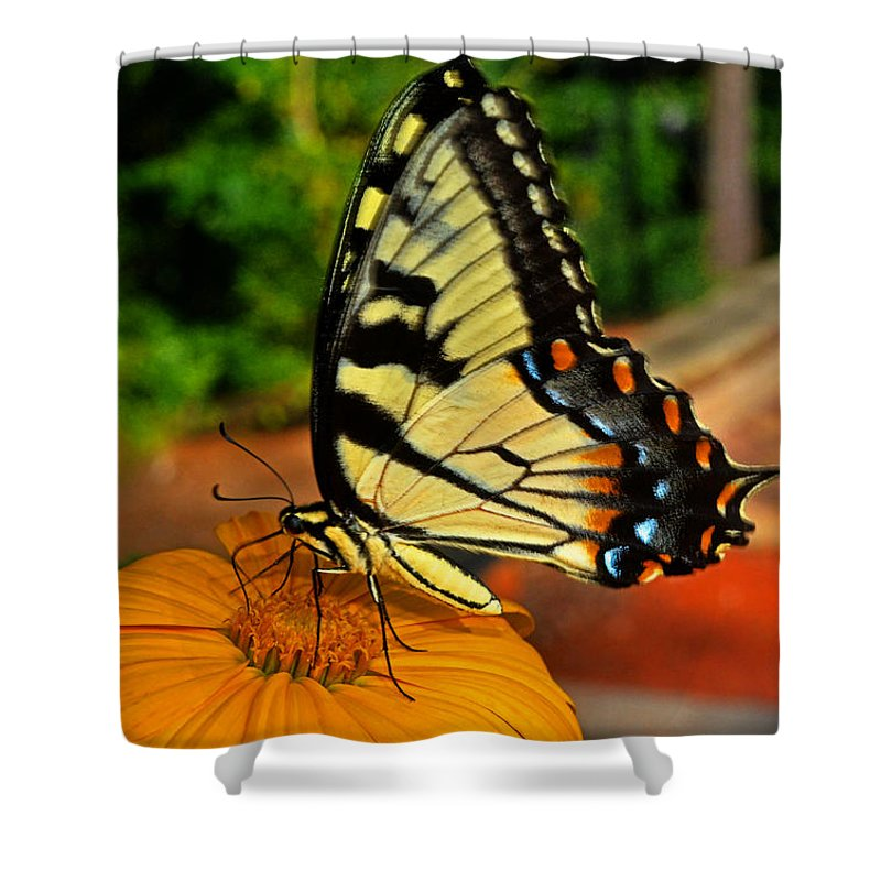 Swallowtail Shower Curtain featuring the photograph Breakfast At The Gardens - Swallowtail Butterfly 005 by George Bostian