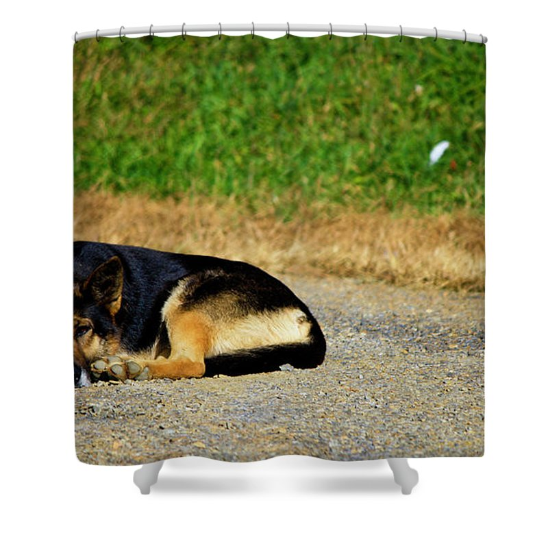 Breaktime Shower Curtain featuring the photograph Breaktime by Teresa Mucha