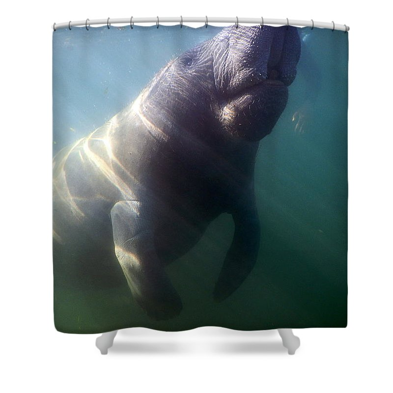 Manatee Shower Curtain featuring the photograph Breath by Lydia Cox