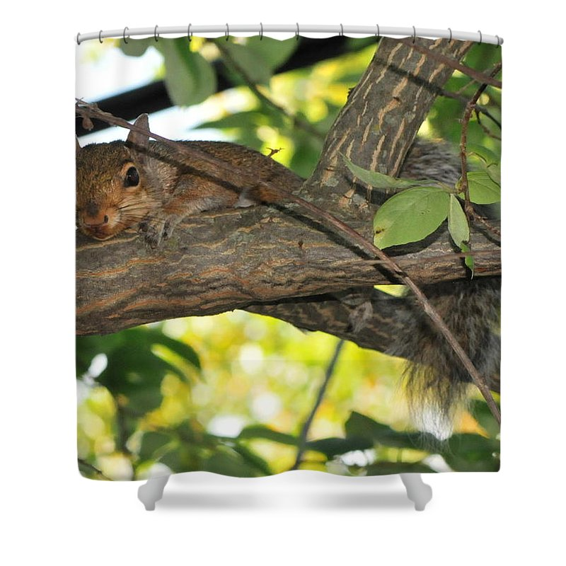 Squirrel Shower Curtain featuring the photograph Breathe Easy by Michelle DiGuardi