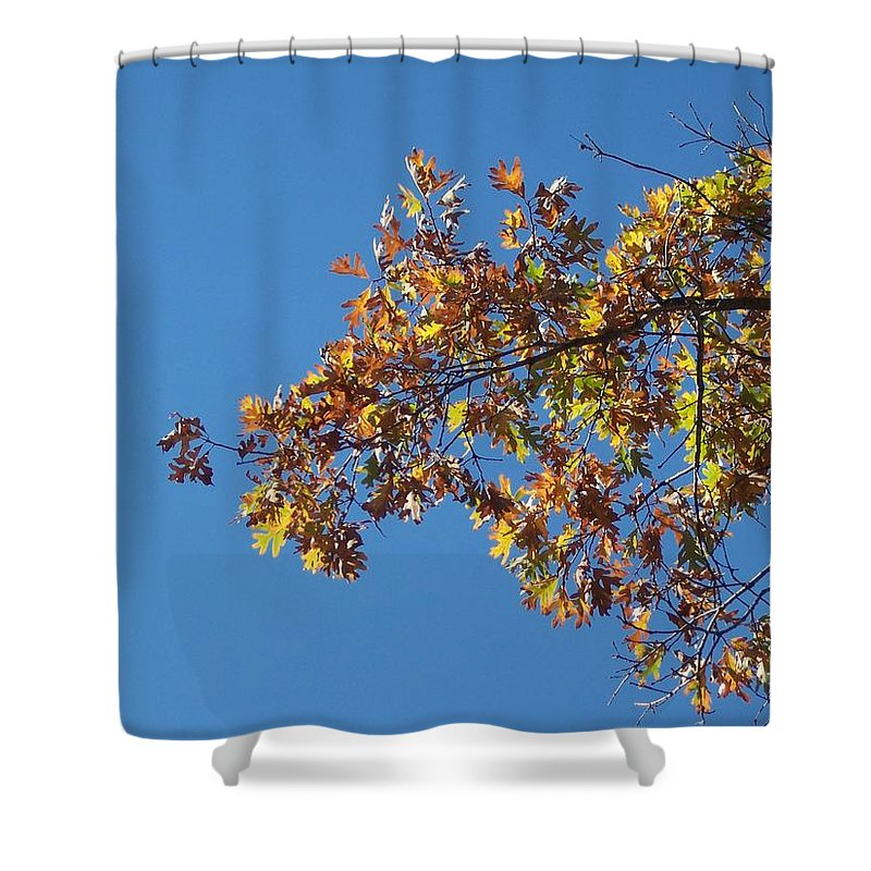 Branch Shower Curtain featuring the photograph Bright Autumn Branch by Michelle Miron-Rebbe