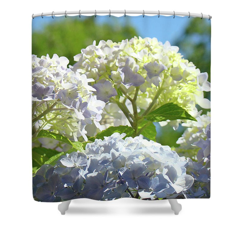 Nature Shower Curtain featuring the photograph Bright Floral Art Pastel Blue Purple Hydrangeas Flowers Baslee Troutman by Baslee Troutman