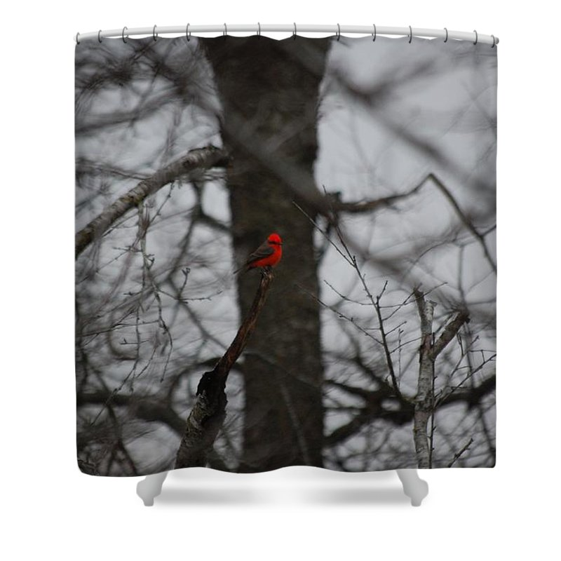 Digita Photo Shower Curtain featuring the digital art bRIGHT SPOT ON A CLOUDY DAY by David Lane