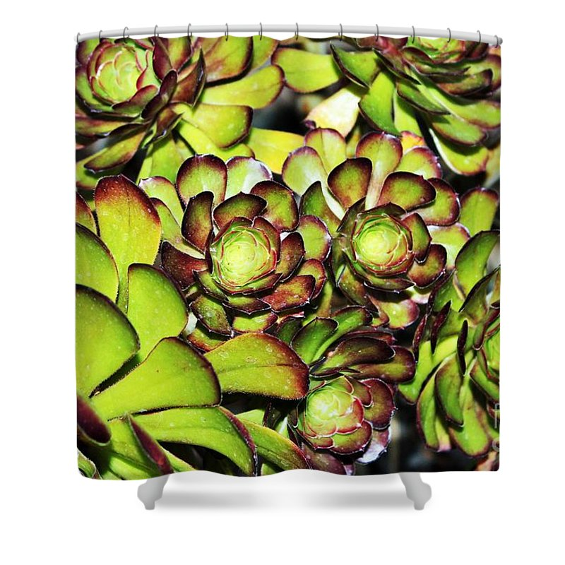 Succulents Shower Curtain featuring the photograph Bright Succulents by LKB Art and Photography