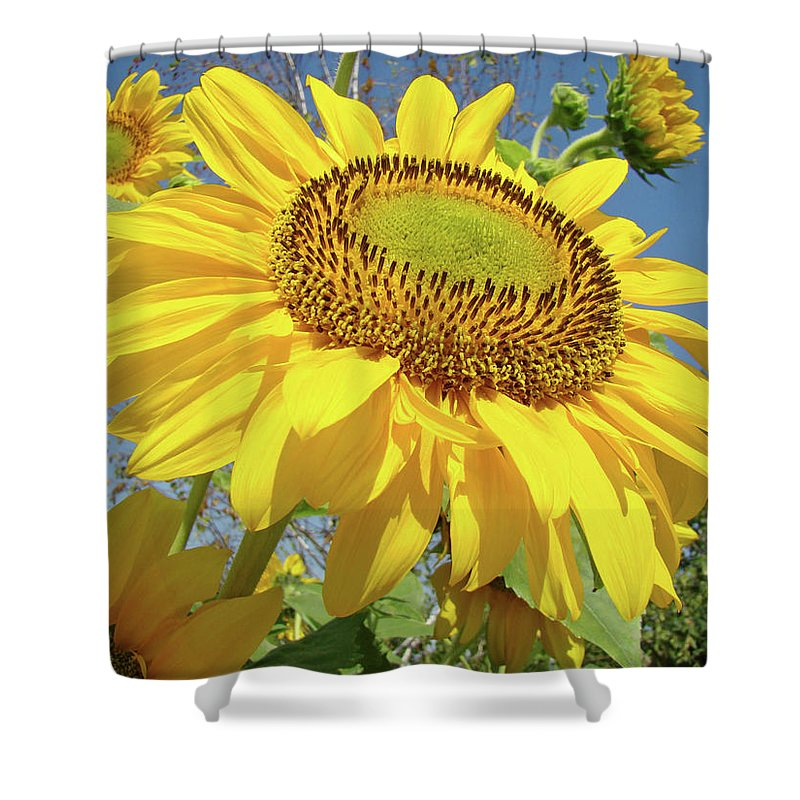 Sunflower Shower Curtain featuring the photograph Bright Sunny Happy Yellow Sunflower 10 Sun Flowers Art Prints Baslee Troutman by Baslee Troutman