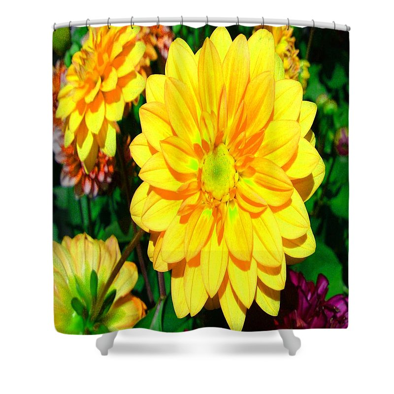 Bright Yellow Dahlia Flower Shower Curtain featuring the photograph Bright Yellow Dahlia Flower by Gary Simmons
