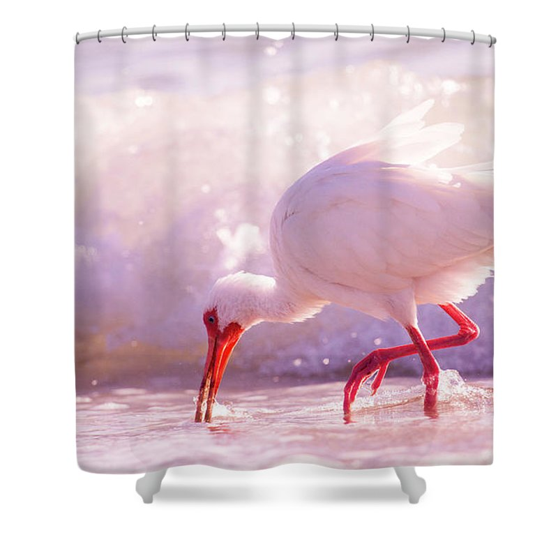 Ibis Shower Curtain featuring the photograph Brilliant Beauty Cortez Beach by Betsy Knapp