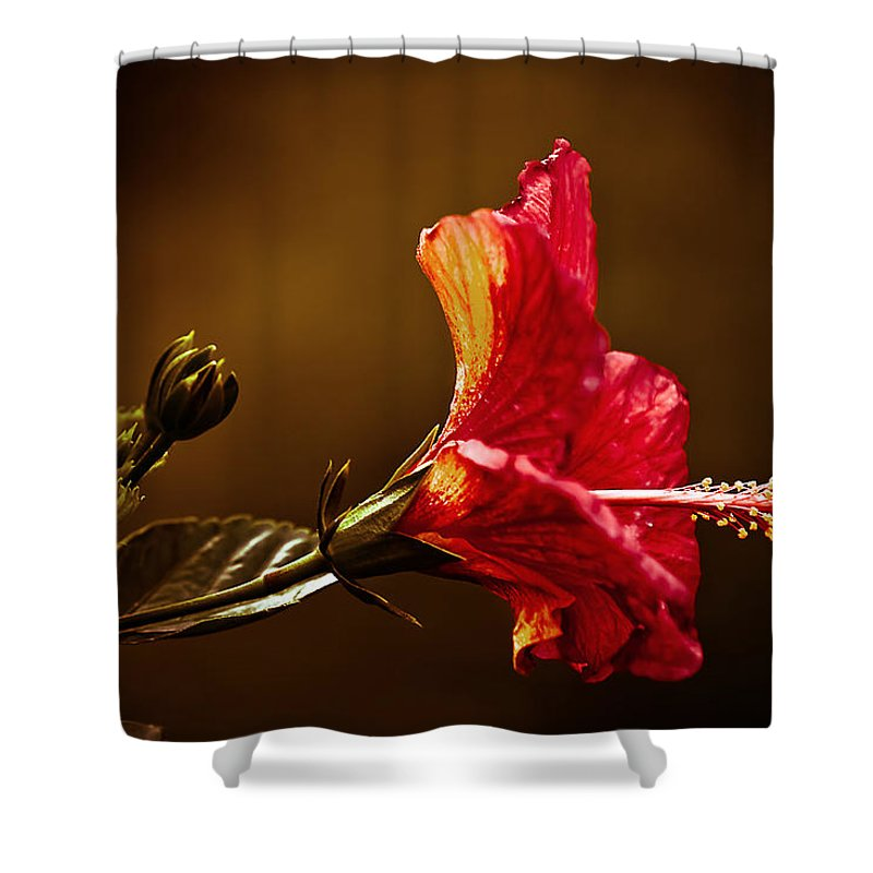 Hibiscus Shower Curtain featuring the photograph Brilliant Hibiscus by Keith Allen