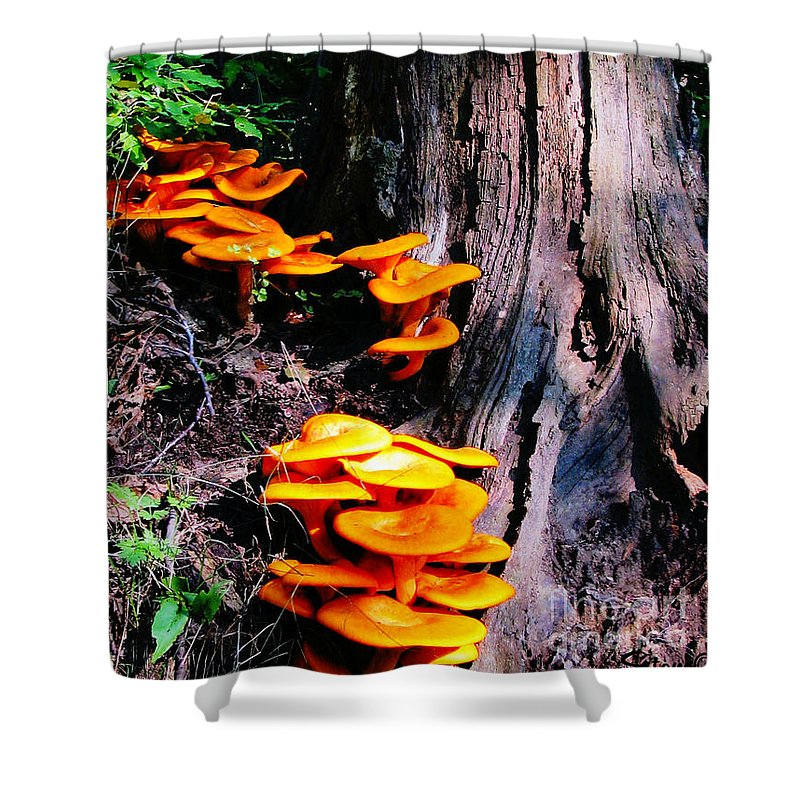 Orange Shower Curtain featuring the photograph Brilliant Orange by September Stone