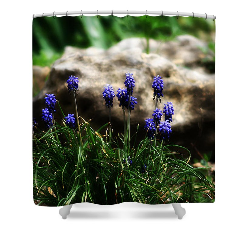 Flowers Shower Curtain featuring the photograph Bring on the purple by Toni Hopper