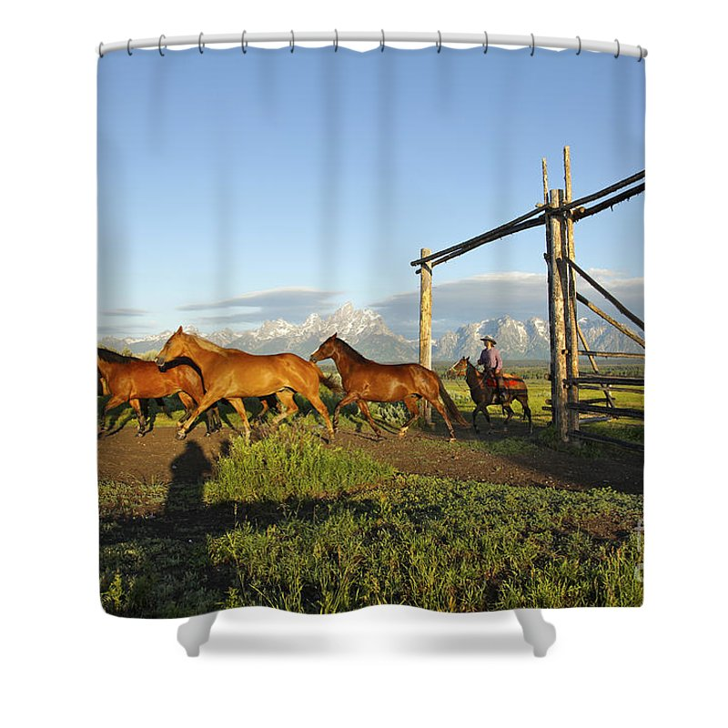 Grand Teton National Park Shower Curtain featuring the photograph Bringing In The Remuda by Daryl L Hunter