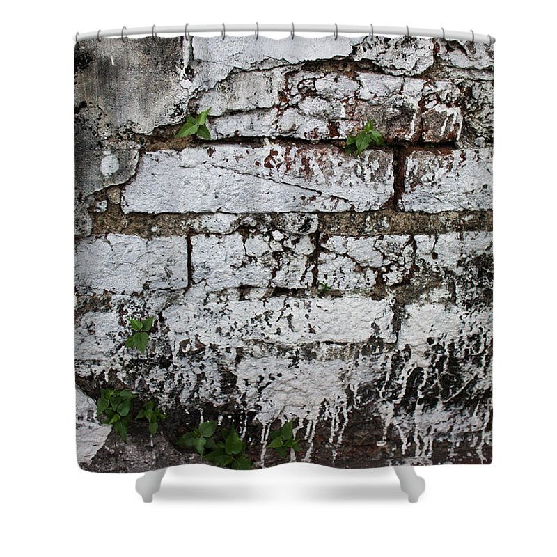 Asia Shower Curtain featuring the photograph Broken Stucco Wall With Whitewashed Exposed Brick Texture And Ve by Jason Rosette