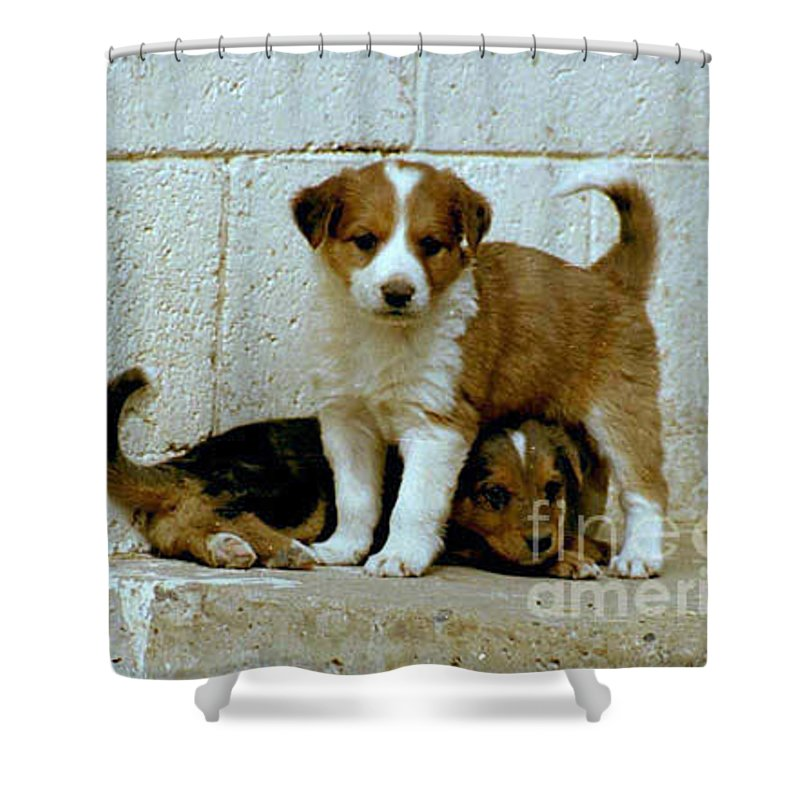 Puppies Shower Curtain featuring the photograph Brothers by Kathy McClure