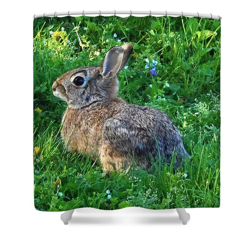 Rabbit Shower Curtain featuring the photograph Brow Pencil by Cassandra Dice