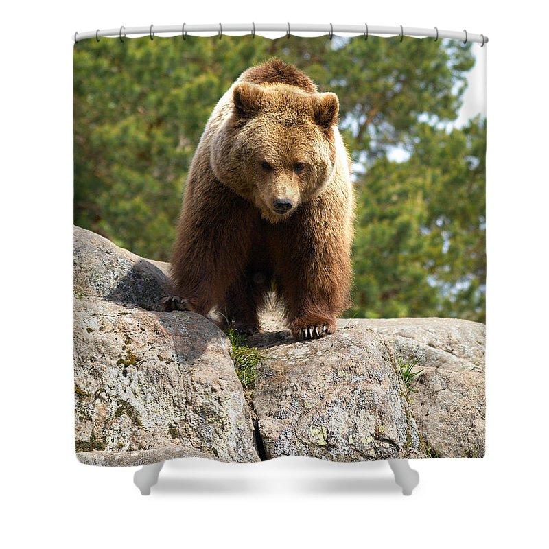 Lehtokukka Shower Curtain featuring the photograph Brown Bear 3 by Jouko Lehto