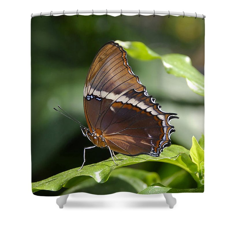 Butterfly Shower Curtain featuring the photograph Brown Beauty by David Lee Thompson