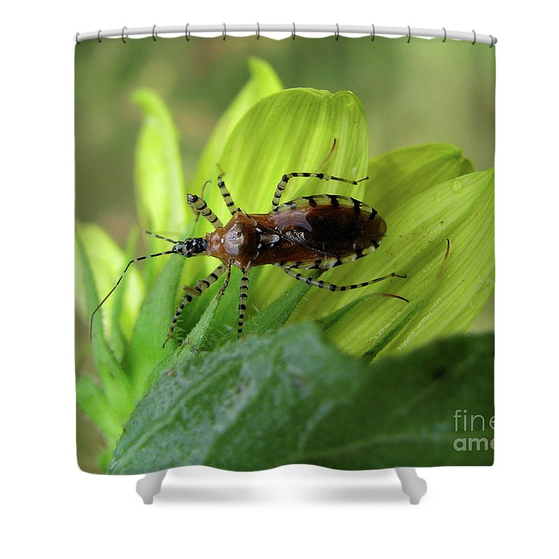 Insect Shower Curtain featuring the photograph Brown Insect by Donna Brown