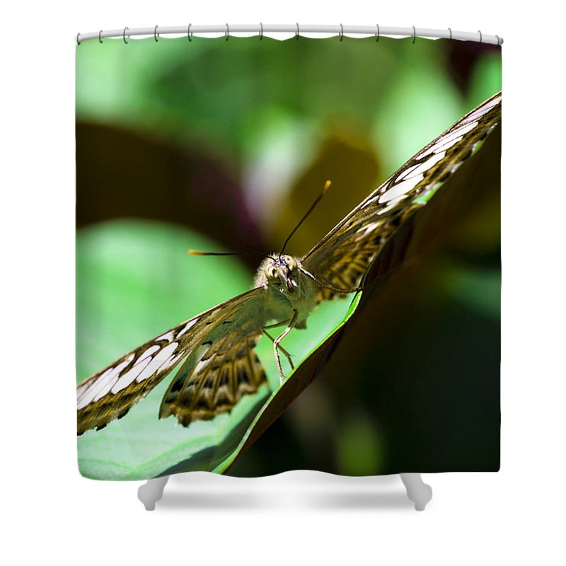 Butterfly Shower Curtain featuring the photograph Brown Clipper Landing by Malik Hunt