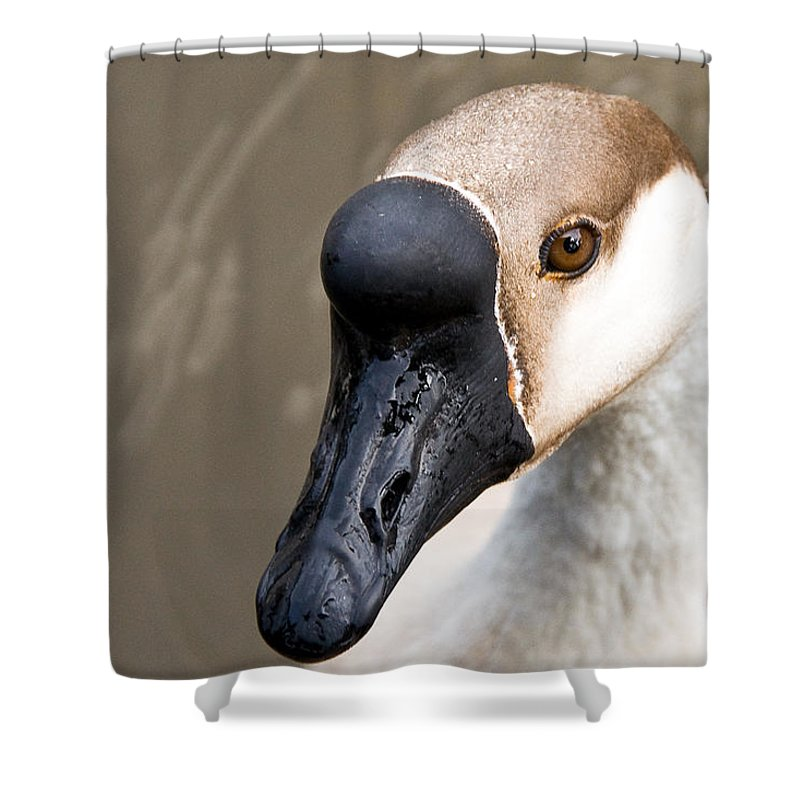 Chinese Brown Goose Shower Curtain featuring the photograph Brown Eye by Christopher Holmes