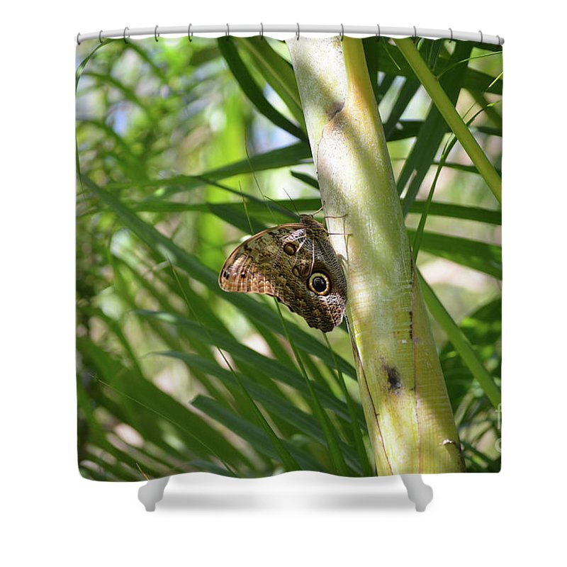 Blue Morpho Shower Curtain featuring the photograph Brown Morpho Butterfly Resting On A Sunny Tree by DejaVu Designs