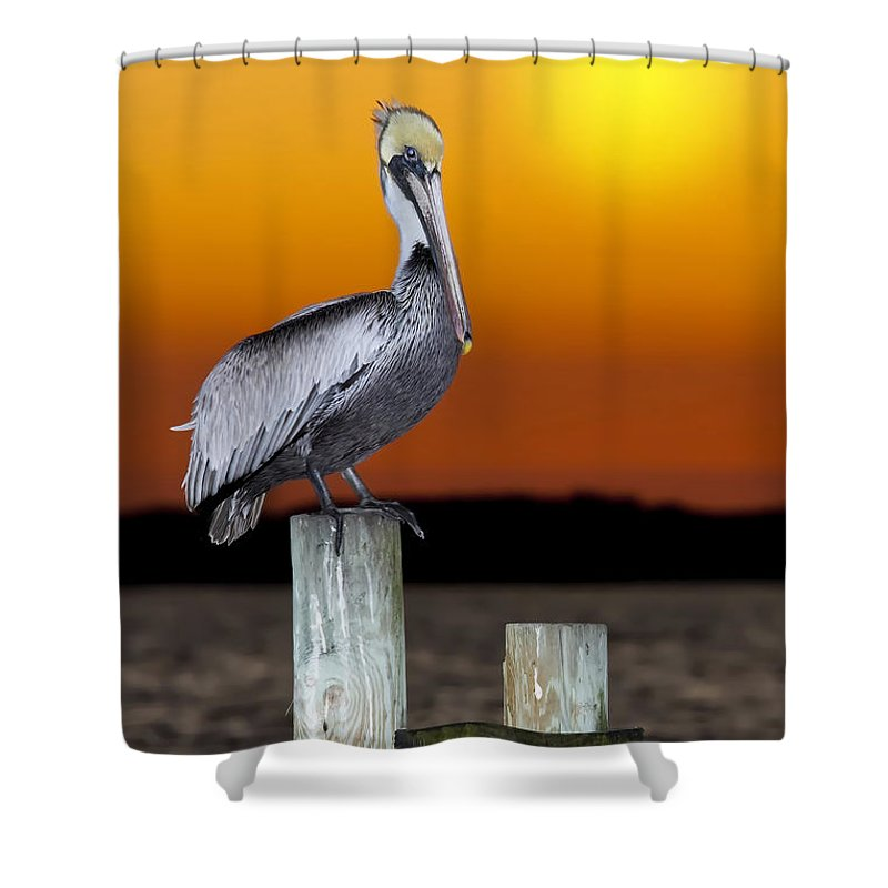Brown Pelican Shower Curtain featuring the photograph Brown Pelican by Janet Fikar