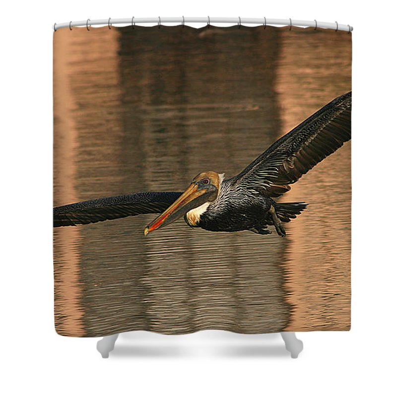 Pelican Shower Curtain featuring the photograph Brown Pelican On A Sunset Flyby by Max Allen