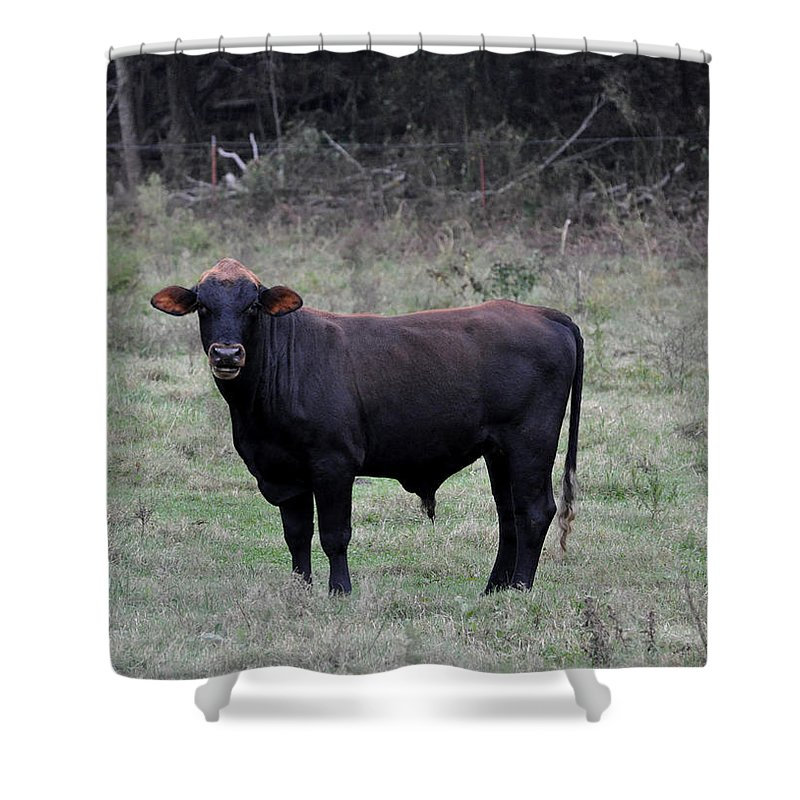 Animals Shower Curtain featuring the photograph Brutus by Jan Amiss Photography