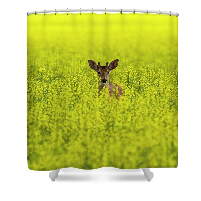 Canola Shower Curtain featuring the photograph Buck In Canola by Mark Kiver