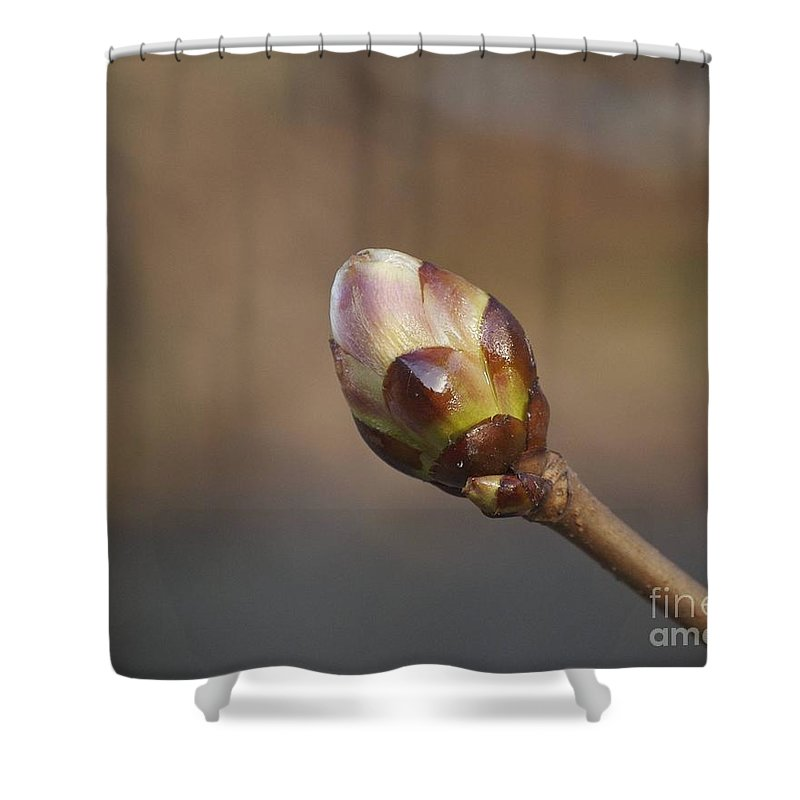 Bud Shower Curtain featuring the photograph Budding by Faith Harron Boudreau