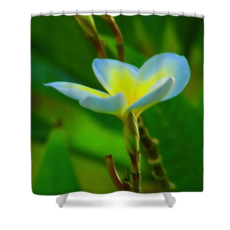 Plumeria Shower Curtain featuring the photograph Buds And A Blossom by Craig Wood