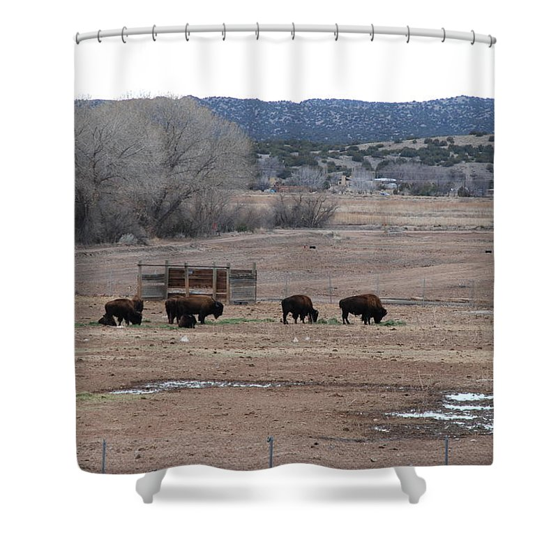 Buffalo Shower Curtain featuring the photograph Buffalo New Mexico by Rob Hans