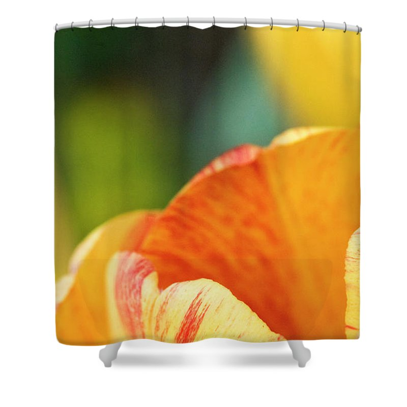 Tulip Shower Curtain featuring the photograph Bug View Of Tulip by Marilyn Hunt