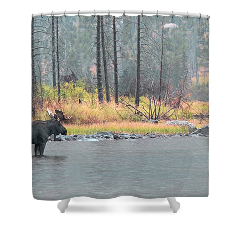 East Rosebud Shower Curtain featuring the photograph Bull And Cow Moose In East Rosebud Lake Montana by Gary Beeler