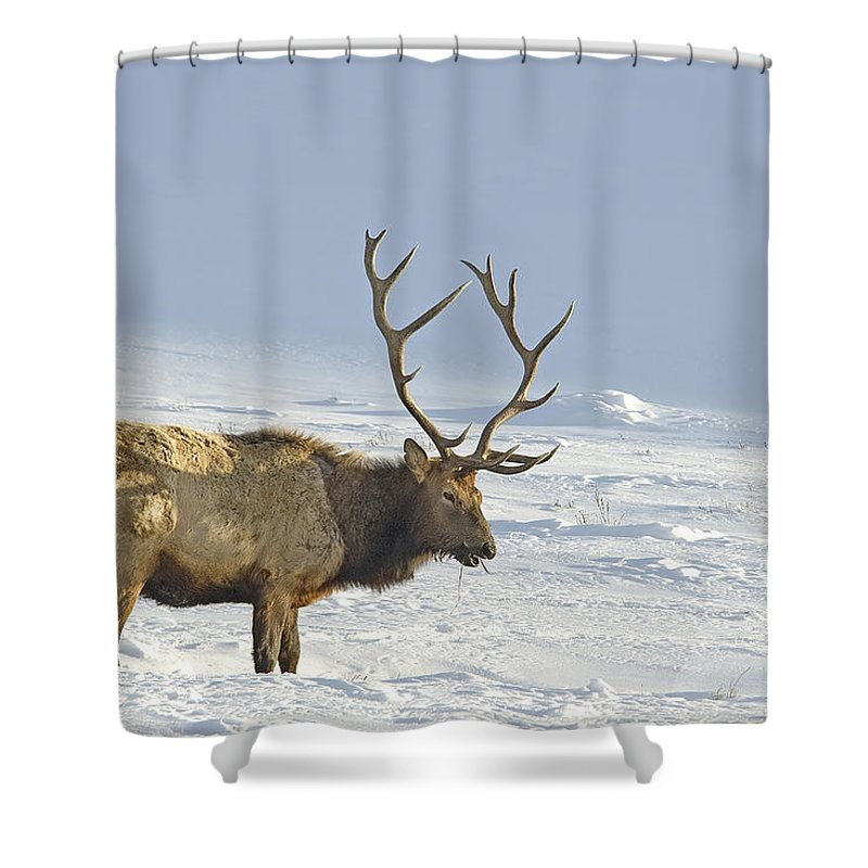 Elk Shower Curtain Featuring The Photograph Bull In Snow By Gary Beeler