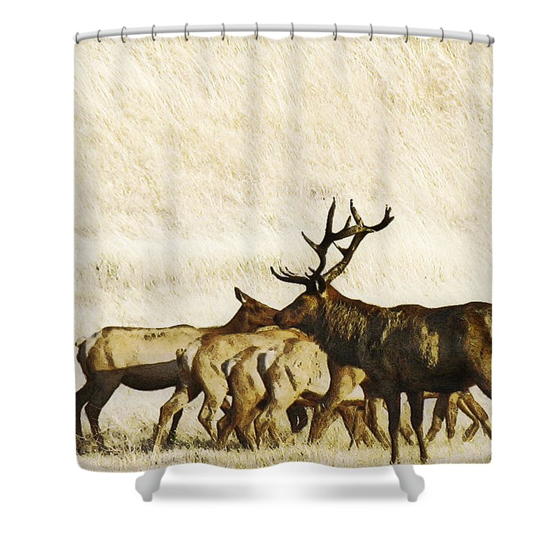 Landscape Shower Curtain featuring the photograph Bull Elk by Karen W Meyer
