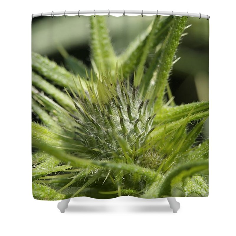 Flower Shower Curtain featuring the photograph Bull Thistle - New England by Erin Paul Donovan