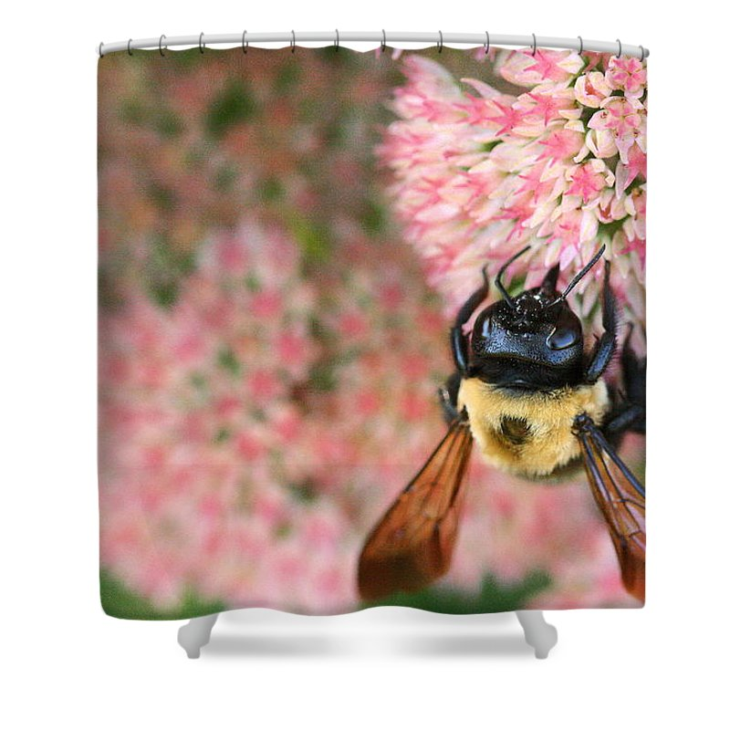Bee Shower Curtain featuring the photograph Bumble Bee by Angela Rath