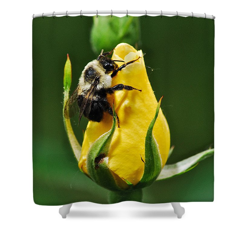 Flowers Shower Curtain Featuring The Photograph Bumble Bee On Rose By  Michael Peychich
