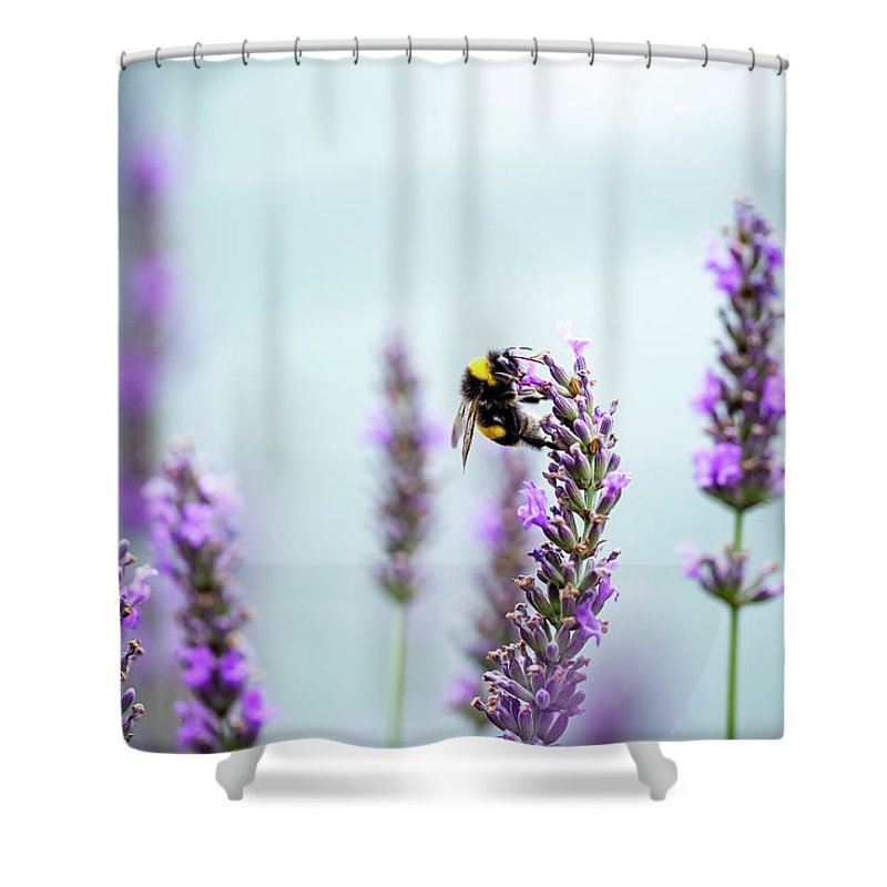 Bumblebee And Lavender Shower Curtain for Sale by Nailia Schwarz