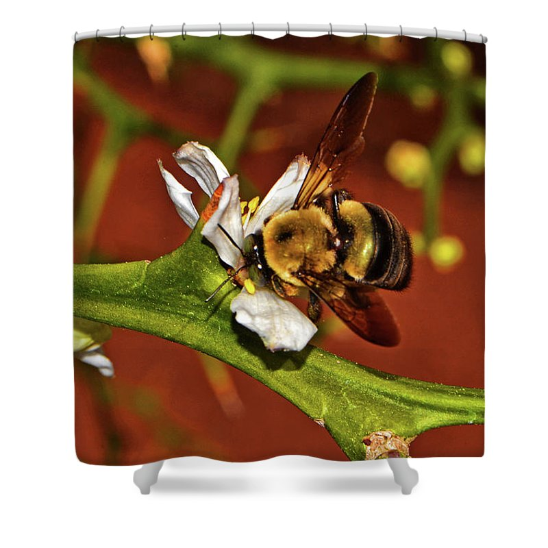 Bee Shower Curtain featuring the photograph Bumblebee On A Hardy Orange Blossom 002 by George Bostian