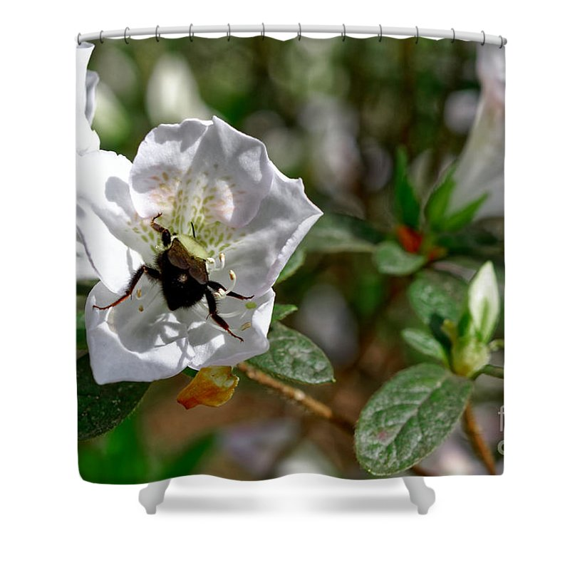 Bumble Bee Shower Curtain featuring the photograph Bumblebee On White Azalea by Paul Mashburn