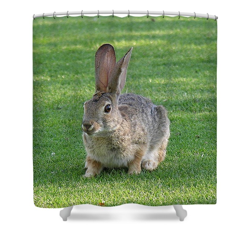 Bunny Shower Curtain featuring the photograph Bunny by Diane Greco-Lesser