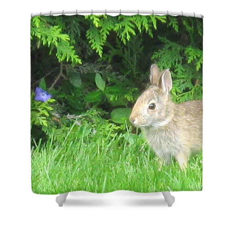 Rabbit Shower Curtain featuring the photograph Bunny In Repose by Ian MacDonald