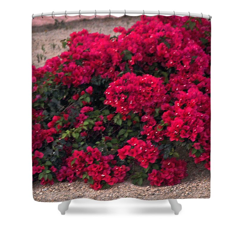 Flower Shower Curtain Featuring The Photograph Burgundy Bougainvillea By  Jay Milo