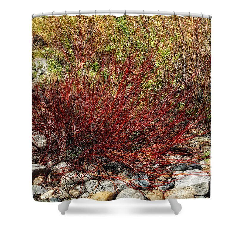Willow Bush Shower Curtain featuring the photograph Burning Bush by Donna Blackhall