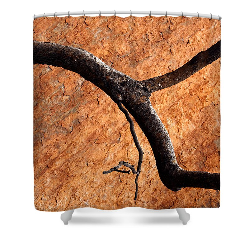 Gum Tree Shower Curtain featuring the photograph Burnt Orange by Mike Dawson