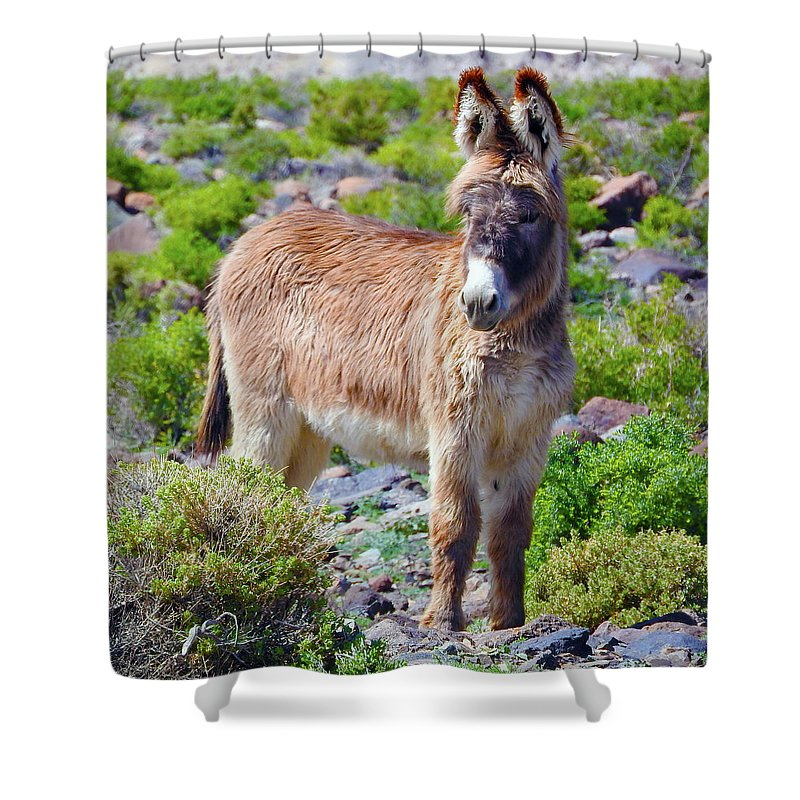 Burro Shower Curtain featuring the photograph Burro Babe by Sandra O'Toole