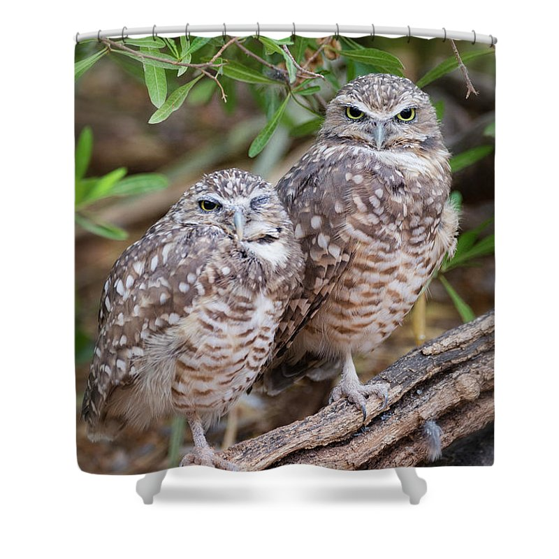 Burrowing Owl Shower Curtain featuring the photograph Burrowing Owl Pair by Saija Lehtonen
